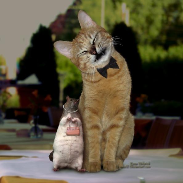Tikus dan Kucing Pun bisa bersanding bobo bersama, kenapa kita, ada manusia lebih mulia tapi tidak bisa hidup dalam kasih sayang ?